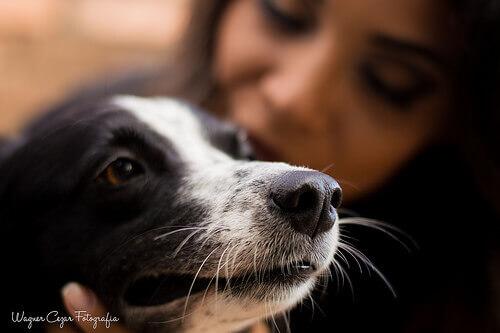 Os cães tornam sua vida completa