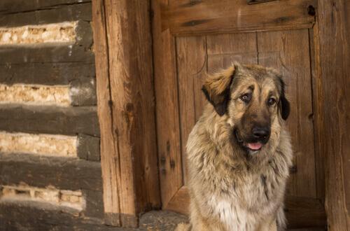 Cão com Alzheimer