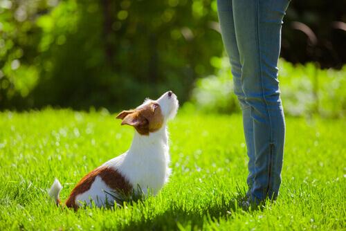 Cão sendo treinado
