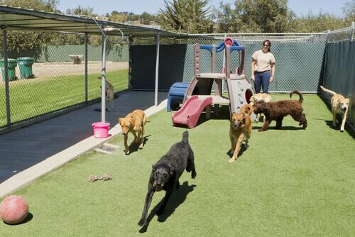 Somente 44% dos cães e gatos recolhidos pelos protetores, na Espanha, são adotados