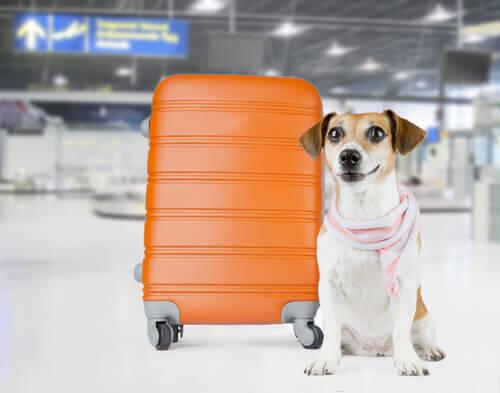 O aeroporto JFK cria um terminal para animais