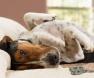 Como lidar com o mau cheiro dos cães