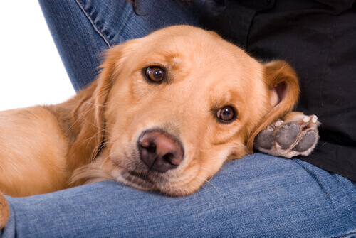 Cachorro procurando atenção