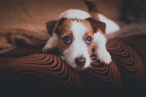 Cão esperando seus donos