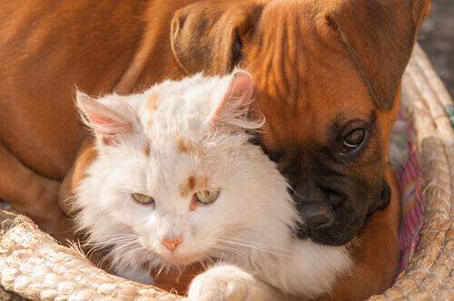 O que são as zoonoses?