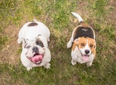 Como cumprimentar os cães