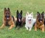 Cães com problema de esfíncteres