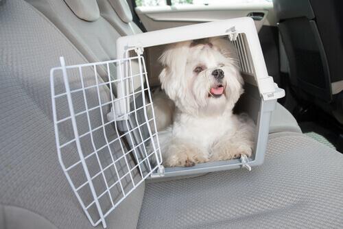 Caixa de transporte cão