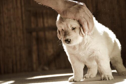 doenças de pele em cães