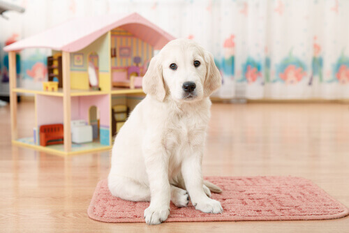 Cachorro em tapete