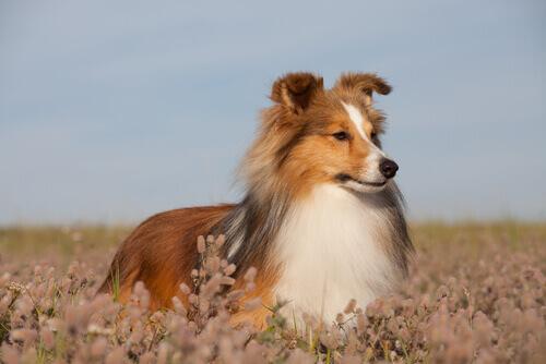 As doenças de pele em cães mais comuns
