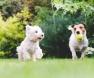 dois-cães-brincando