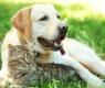 Sendo ecológicos com os animais de estimação