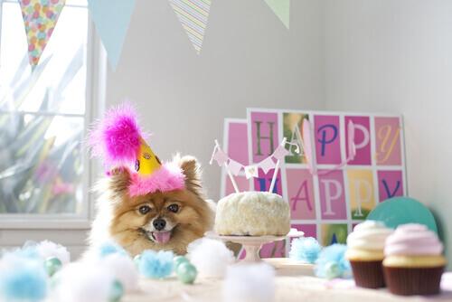 Faça uma festa de aniversário para seu cão