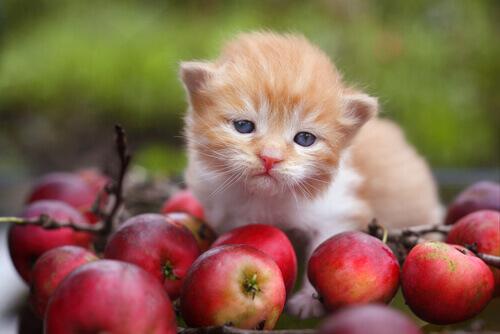 O que são os antioxidantes e que papel desempenham na nutrição de animais deestimação?