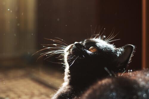 Os gatos e a escuridão