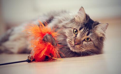 Gatos gostam de brincar