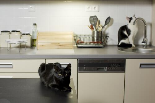 Lugares perigosos para os gatos