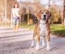Cachorro com guia extensível