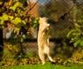 A hiperestesia felina
