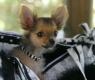 Moda para cães