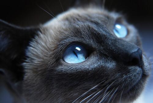 Olhos de gato