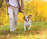 Vínculo com cão