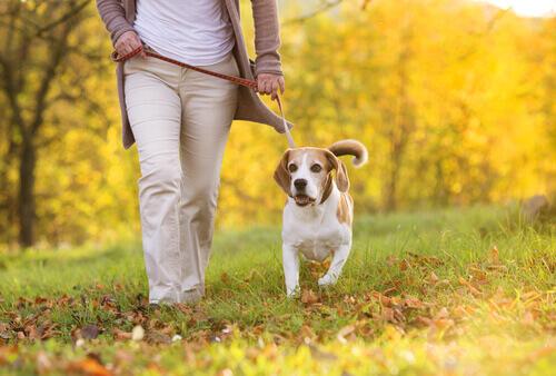 Melhore o vínculo com o seu cão