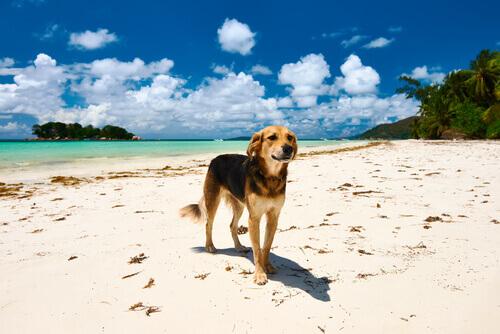 Cão na praia