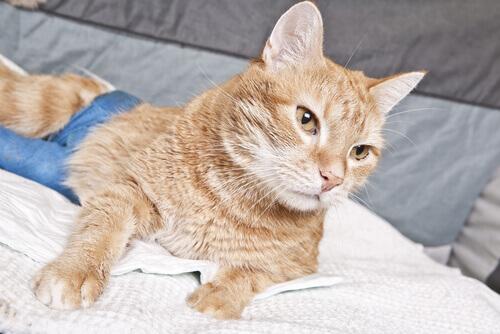 Remédios para resfriados em gatos