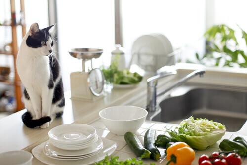 Saúde para seu animal de estimação e higiene para sua cozinha