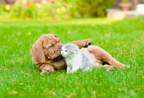 A esterilização de cães e gatos