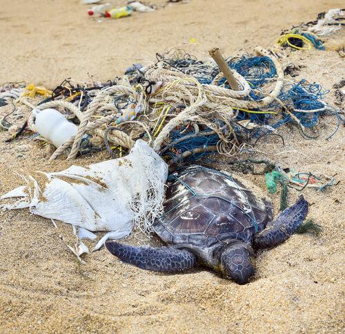 Lixo e tartaruga