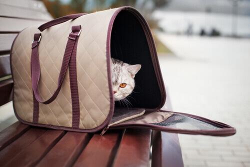 Gato em bolsa de transporte
