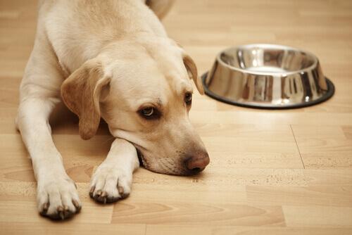 A tuberculos em cães