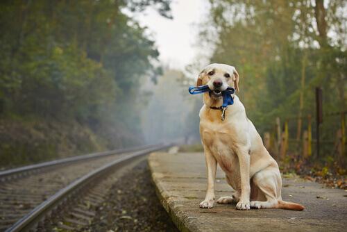 Viajar de trem com o seu pet. O que considerar?