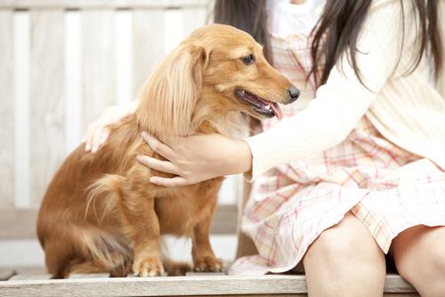 Cão recebendo carícias