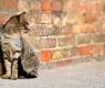 Adotar gatos de rua