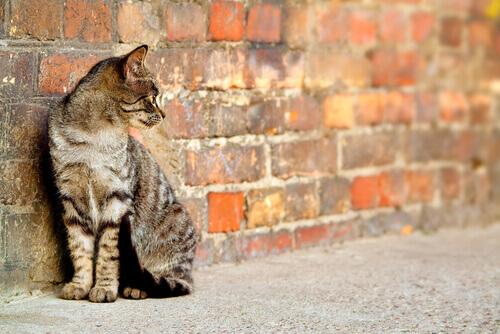 Da rua para um lar: adotar gatos de rua