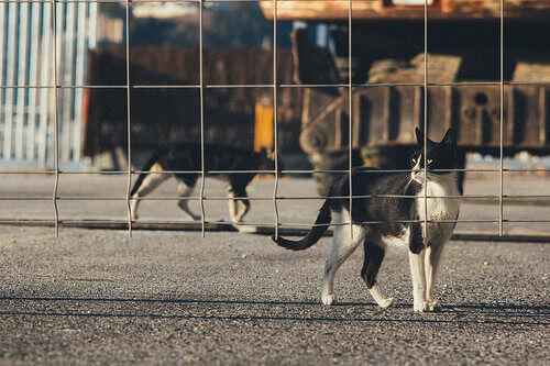 Abandono animal: problema global de nosso tempo