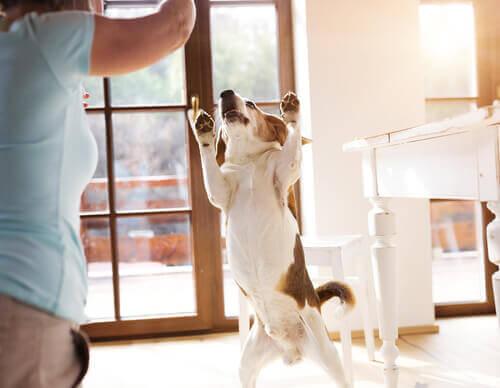 Dona brincando com seu cão