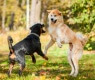 cães-atacando