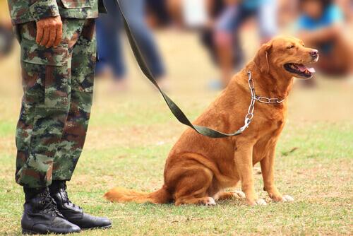 Histórias dos cães em guerras