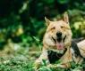 cão-2