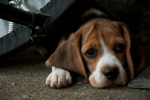 Em que idade a maioria dos cães são abandonados?