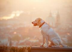 cão-perdido