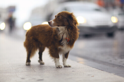 Cão na rua