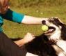 Como reforçar o vínculo com seu cão