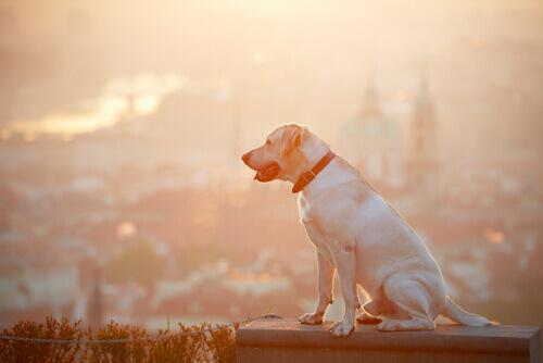 O que fazer se você encontrar um cão perdido
