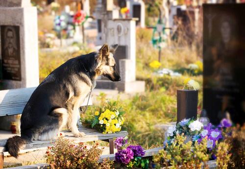 Cão em cemitério